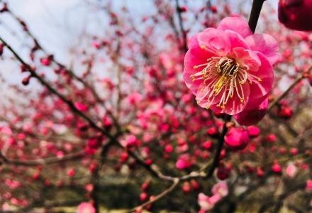 春风十里,醉人的美啊,都想去林芝看你!(千寻-西藏观赏桃花攻略路书)